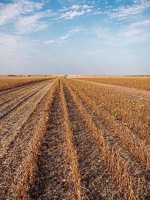 Serbia, Vojvodina, Ripe soybean plants with combine harvester in the background - p300m2012908 von oticki
