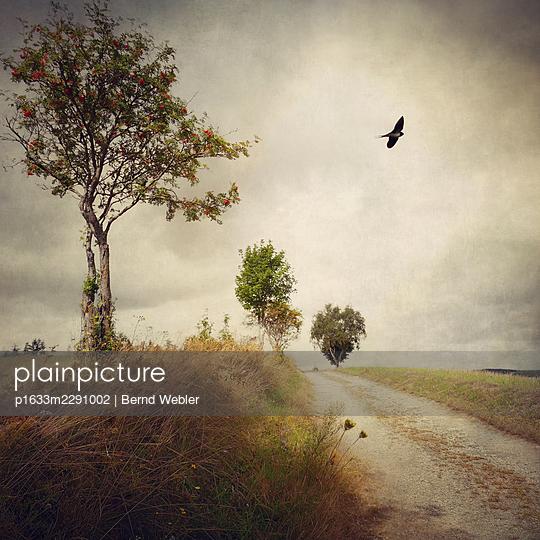 The Lonely Summer II - p1633m2291002 by Bernd Webler