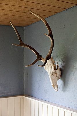 An animal skull with antlers hanging on a wall - p301m714211f by Halfdark