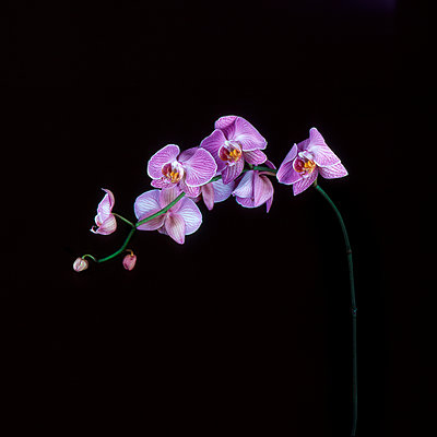 Orchid - p1088m1050176 by Martin Benner