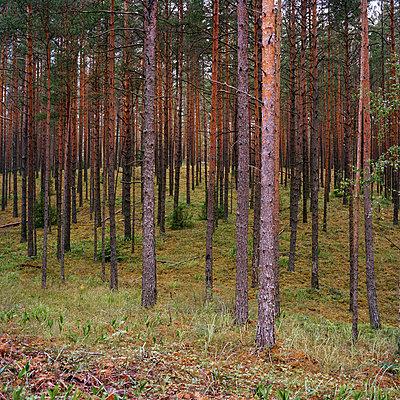 Gauja, Lettland - p1097m882091 von Mélanie Bahuon