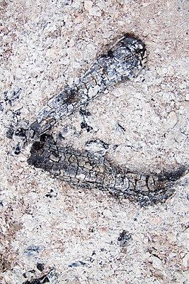 Verbrannt - p7390508 von Baertels