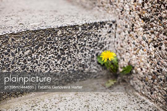 p1398m1444591 by Tabitha Genoveva Harter