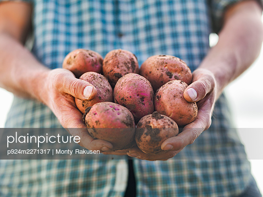 UK, Tadcaster, Close-up of farmers hands holding freshly picked potatoes - p924m2271317 by Monty Rakusen