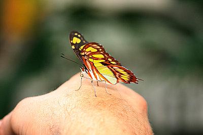 Butterfly - p1790589 by Roland Schneider