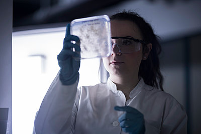 Scientist examiming sample - p300m1140786 by Sigrid Gombert
