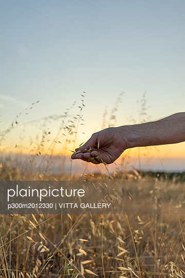 Spain, Catalonia, Hand plucking grasses on Montserrat at sunset - p300m2012330 von VITTA GALLERY