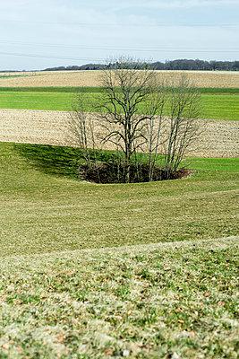 Waldloch - p1164m1034845 von Uwe Schinkel
