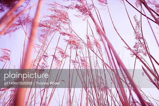 p1149m1525365 von Yvonne Röder