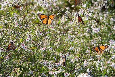 Butterflies - p1261m1124732 by tromp l'oeil