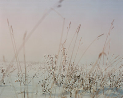 Fog - p1063m2071775 by Ekaterina Vasilyeva