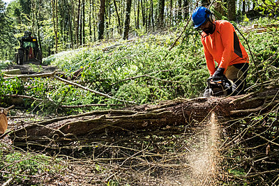 Man wearing bright orange top clearing part of forest. Cutting tree trunk with chain saw. - p1100m2010745 by Mint Images