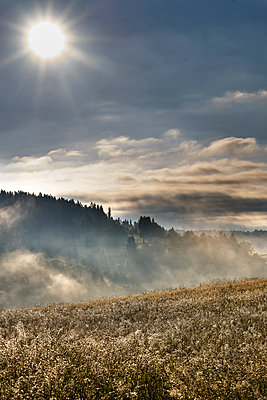Meadow with morning dew, Black Forest, Germany - p1312m2168098 by Axel Killian