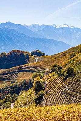Switzerland, Valais, Montagnon, vineyards - p300m1550013 by Werner Dieterich