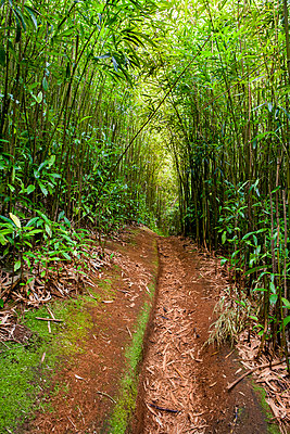 Red Dirt Path Leading Through The Bamboo Forest At Maui - p343m1204044 by Michael Okimoto