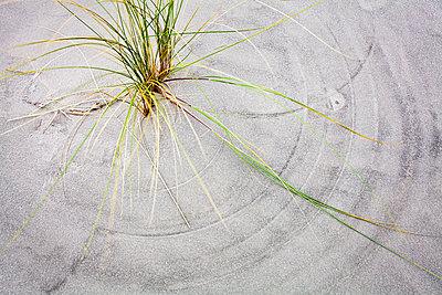 Windspiel - p1043m1185512 von Ralf Grossek