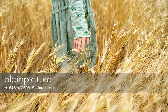 Woman in a cornfield - p1646m2260615 by Slava Chistyakov