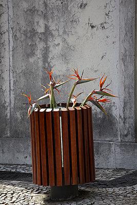 Mülleimer mit Blumen - p415m1460841 von Tanja Luther