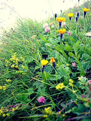 Colourful field flowers - p879m1115387 by nico