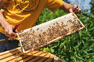 Beehives, Bees and Honey - p1335m2109592 by Daniel Cullen