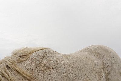 Horseback - p260m859680 by Frank Dan Hofacker