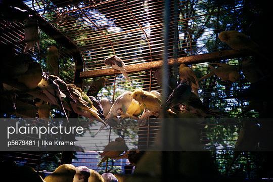 Birdcage - p5679481 by Ilka Kramer