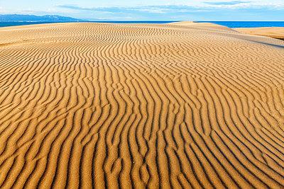 Spain, Tarragona, Ebro Delta, dune - p300m1205688 by David Santiago Garcia