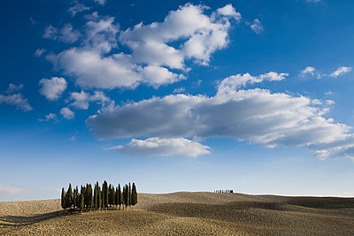 View of cypress trees, Siena, Valle D'Orcia, Tuscany, Italy - p429m943038f by WALTER ZERLA