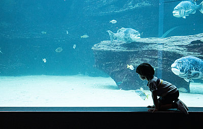 Two Oceans Aquarium, little boy marvels at sea animals - p1640m2246225 by Holly & John