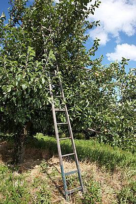 Fruit crops - p4060365 by clack