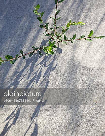 Pflanze im Sand - p606m890795 von Iris Friedrich