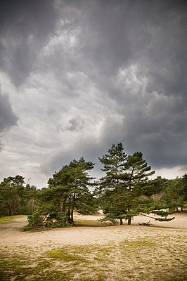 Verdener Dünen in Norddeutschland - p416m784661 von Thomas Schaefer