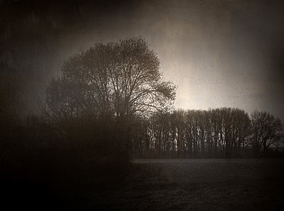 Trees and field - p945m2181562 by aurelia frey