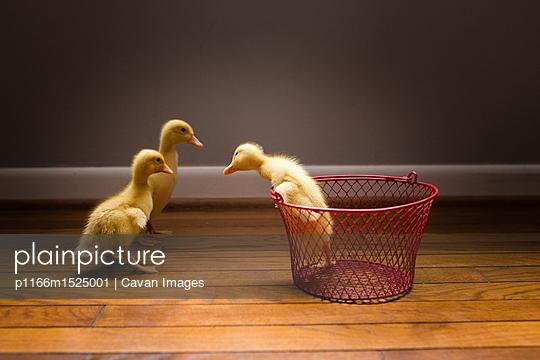 p1166m1525001 von Cavan Images
