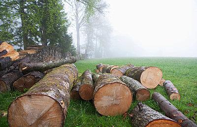 Austrai, Salzkammergut, Mondsee, View of wood in misty forest - p30017902f by Wolfgang Weinhäupl