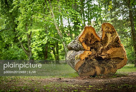 Austria, Burgenland, Bad Taztmannsdorf, hollow tree trunk, tree log - p300m2012493 von EJW