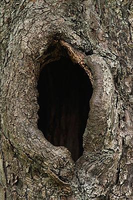 Black hole in tree trunk - p1418m1571997 by Jan Håkan Dahlström