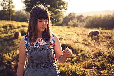 Field of sheep - p1507m2027726 by Emma Grann