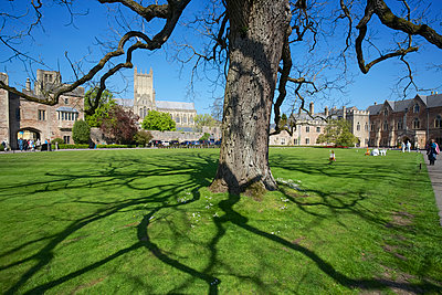 The Bishops's Palace and gardens - p442m1180934 by Chris Caldicott