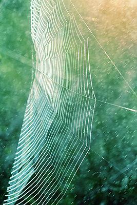 Spinnennetz - p739m826708 von Baertels