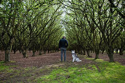Rear view of man walking dog in forest, Woodburn, oregon, USA - p924m1197611 by Heather Binns