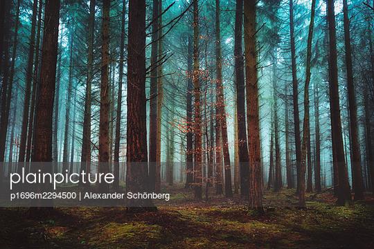Dream forest - p1696m2294500 by Alexander Schönberg