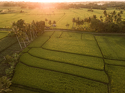 Indonesia, Bali, Aerial view of rice fields - p300m2029773 by Konstantin Trubavin