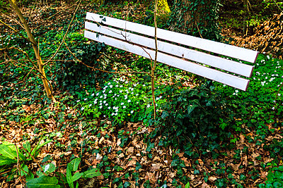Bench - p417m901238 by Pat Meise