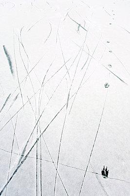 Spuren - p4350089 von Stefanie Grewel
