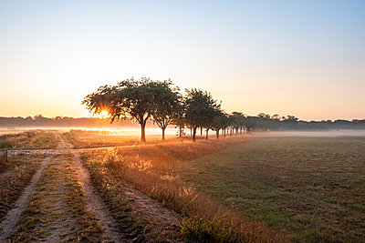 Spandau irrigation fields in the morning fog - p739m2128183 by Baertels