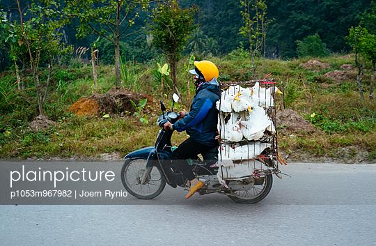 Tiertransport - p1053m967982 von Joern Rynio
