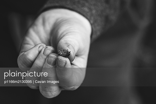 Roly Poly in childs hand - p1166m2130395 by Cavan Images