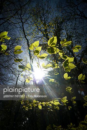 Sonnenstrahlen durchleuchten Wald im Frühling - p597m1161397 von Tim Robinson