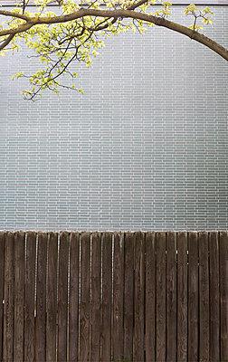 Wooden wall - p1064m938067 by Esmeralda